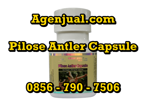 Agen Pilose Antler Capsule Medan | 0856-790-7506