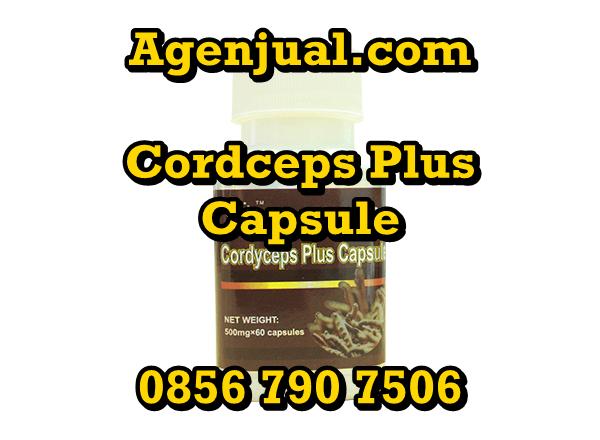 Agen Cordyceps Plus Capsule Sidoarjo | 0856-790-7506